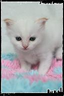 Les bébés de Foxy et Pepper Grace-3632198