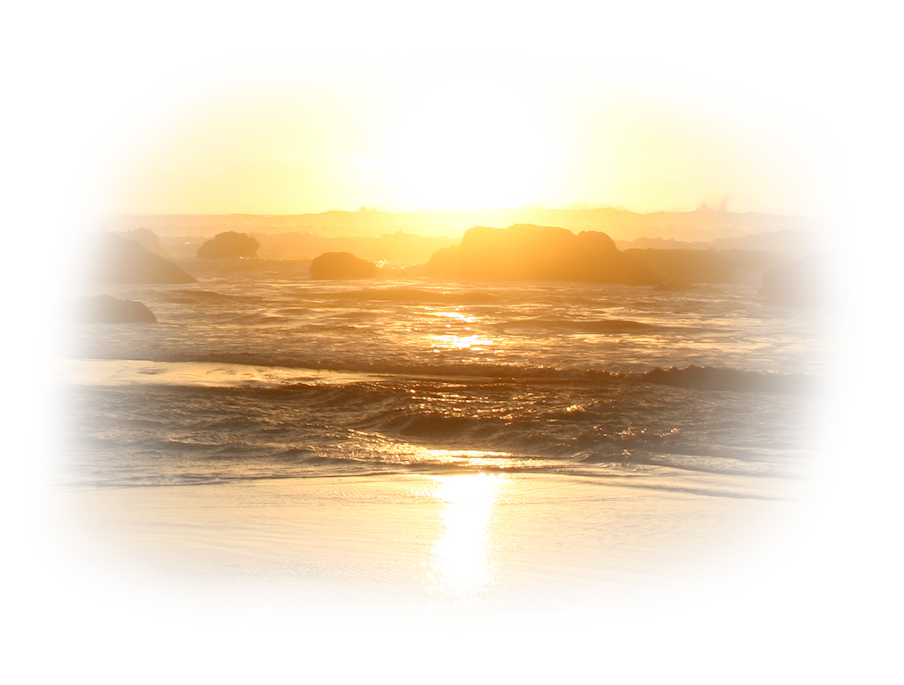 Résultat d'images pour Gifs coquillages mer