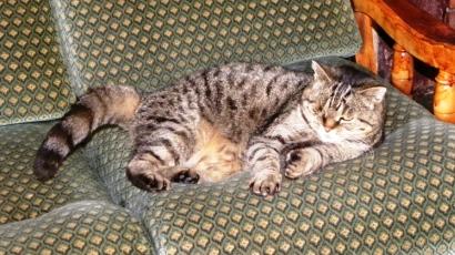 2 chats en danger - Les Essarts (85) Rscn3893-332e3d2