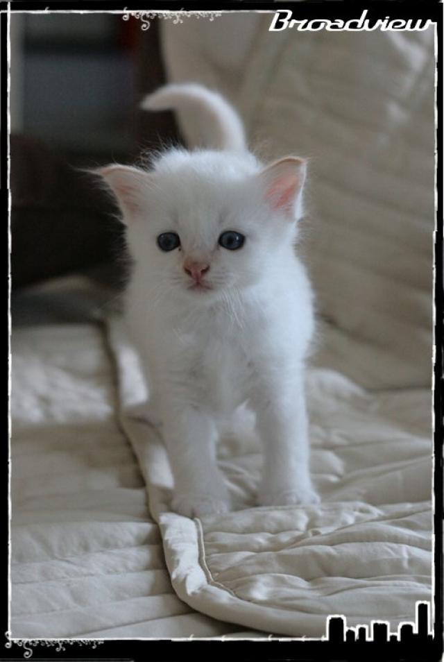 Les bébés de Foxy et Pepper 2012_07_15_jack3-3665cb6